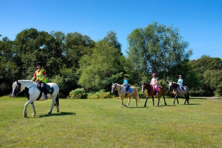 Introduction to Horse Riding for One - 16th Birthday Gifts For Her