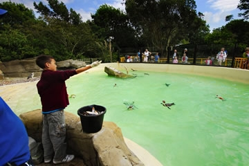 Penguin Feeding Experience for One at Drusillas Park - Christmas  gift