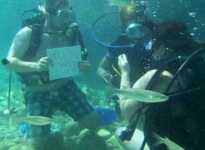 Another scuba diving proposal