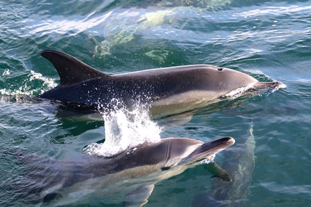 Dolphin and Whale Watching for Two - 50th gift
