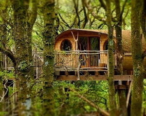 Treehouse Experience for 2 - 50th gift